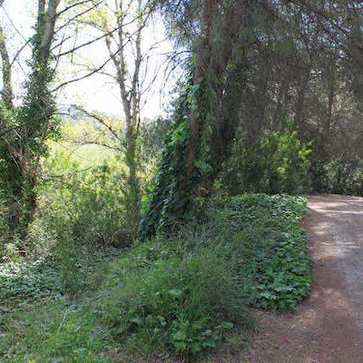 Ruta BTT guiada por el parque fluvial del Turia