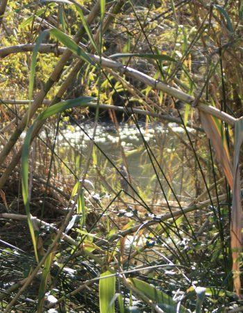 Ruta Violeta: Agua