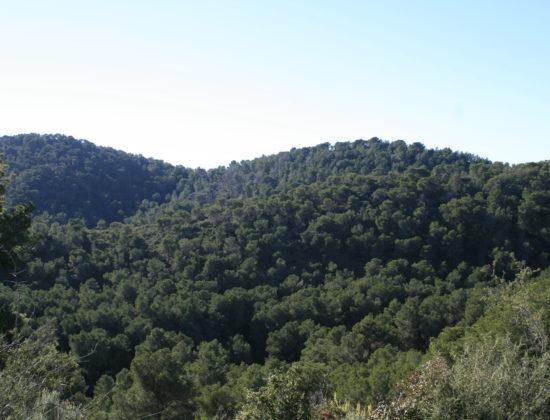 Ruta Amarilla: Les Rodanes