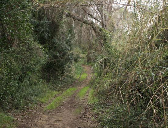 Ruta circular corta La Pea