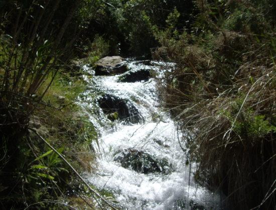 Sierra de los Bosques