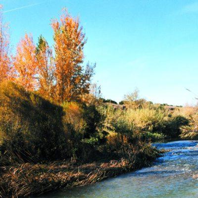 rio túria pedralba