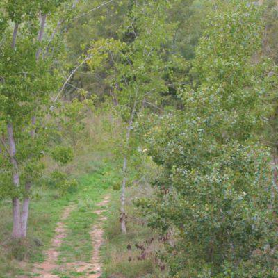 Parque Fluvial de Pedralba